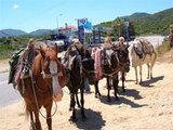 Donkey-tour